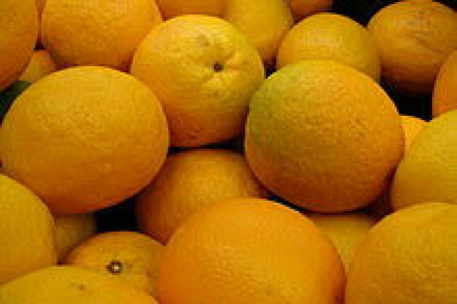 SURPRISINGLY HIGH CITRUS EXPORTS THIS YEAR